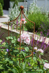 Rose garden in Ashtead Surrey