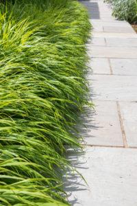 Soft grasses on stone path in Ashtead Surrey