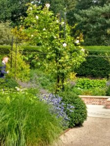 Historical Roses supports at Exbury Centenary Garden